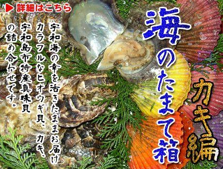 愛媛宇和海直送の魚介類販売(ヒオウギ貝,サザエ,真珠貝,真珠,アワビ,鮑)をおとり寄せ。